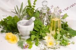piante-erbe-medicinali