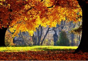 colori magici di autunno